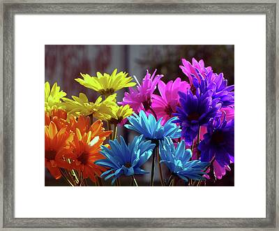 Rainbow Mums 5 Of 5 Framed Print by Tina M Wenger