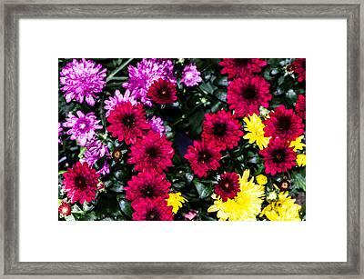 Rainbow Of Color Flowers Framed Print