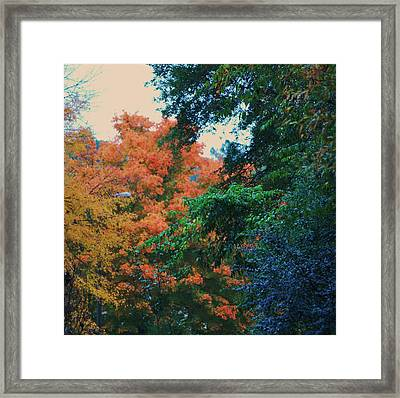 Rainbow Of Fall Framed Print by Trudi Southerland