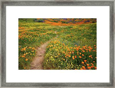 Framed Print featuring the photograph Rainbow Of Wildflowers Bloom Near Diamond Lake In California by Jetson Nguyen