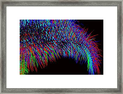 Rainbow Palms Framed Print