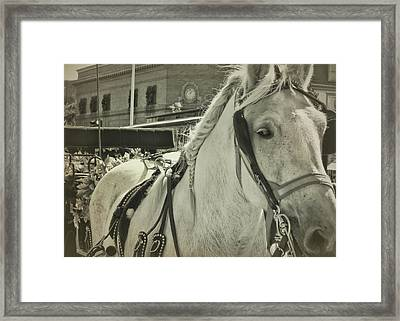 Rainbow Ride Framed Print by Dressage Design