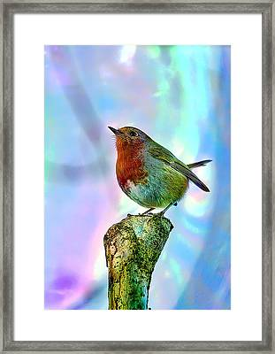 Rainbow Robin Framed Print by Gouzel -
