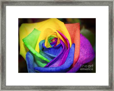 Rainbow Rose In Paint Framed Print