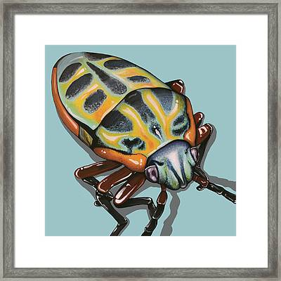Rainbow Shield Beetle Framed Print by Jude Labuszewski