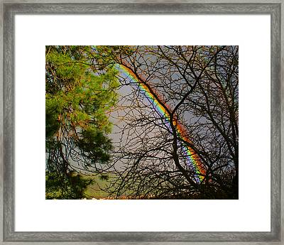 Framed Print featuring the photograph Rainbow Tree by Ben Upham III