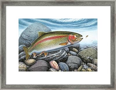 Rainbow Trout Framed Print by Jon Wright