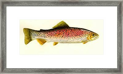 Rainbow Trout Framed Print by Michael Vigliotti