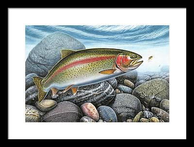 Trout Framed Prints