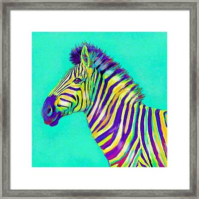 Rainbow Zebra 2013 Framed Print by Jane Schnetlage