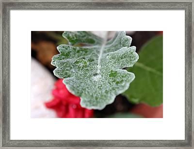 Raincatcher Framed Print by Anne Babineau