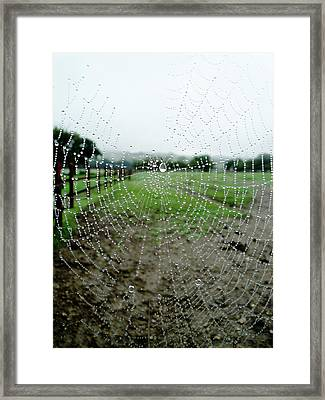 Raincatcher Web Framed Print