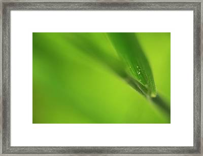Raindrop On Grass Framed Print