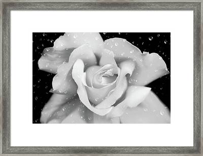 Framed Print featuring the photograph Raindrops On Rose Black And White by Jennie Marie Schell