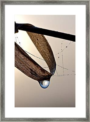 Raindrop Framed Print by Scott Holmes