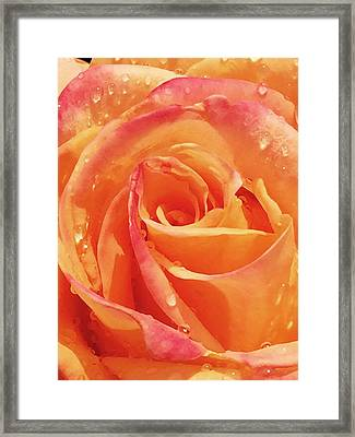 Raindrops And Petals Framed Print by Beverly Johnson