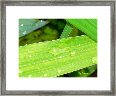 Framed Print featuring the photograph Raindrops by Elly Potamianos