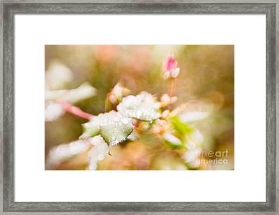 Raindrops Glisten Framed Print by Lisa McStamp