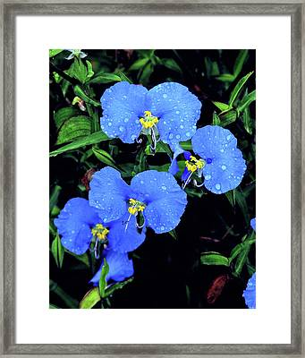 Raindrops In Blue Framed Print by Peg Urban