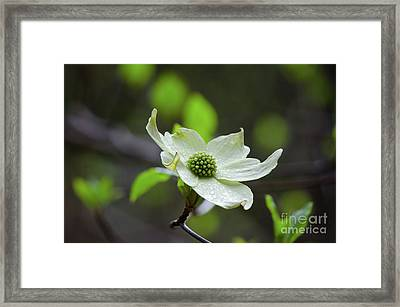Raindrops Keep Falling Framed Print by Debby Pueschel