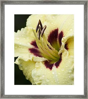 Raindrops On A Petal Framed Print