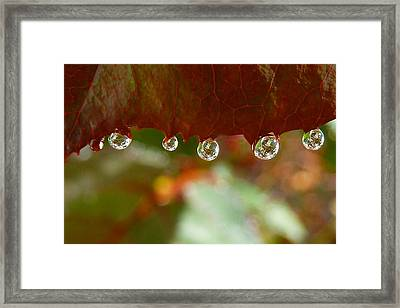 Raindrops On A Red Leaf Framed Print by Patricia Strand
