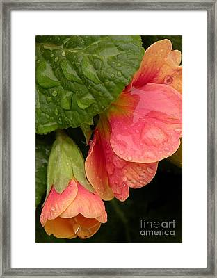 Raindrops On Coral Flowers Framed Print