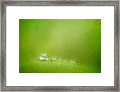 Raindrops On Green Framed Print