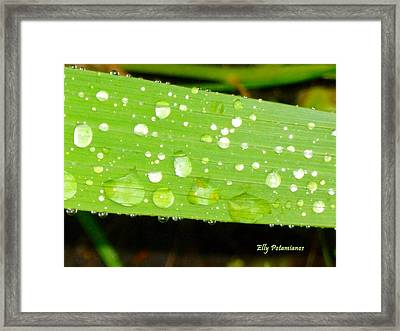 Framed Print featuring the pyrography Raindrops On Leaf by Elly Potamianos
