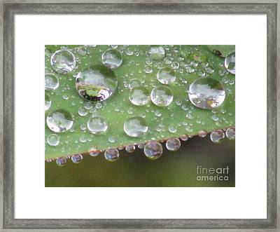 Raindrops On Leaf. Framed Print