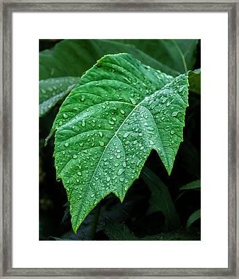Raindrops On Leaf Framed Print by Robert Ullmann