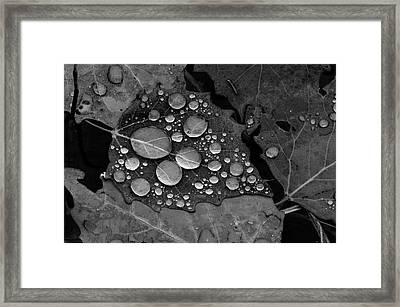 Raindrops On Leaves Framed Print