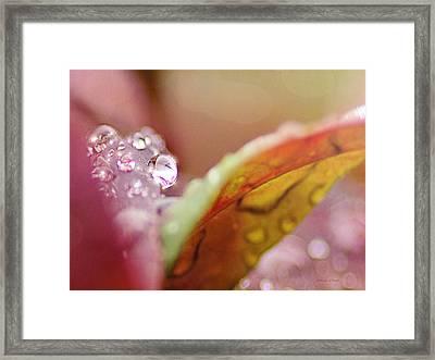 Raindrops On Nandina Framed Print by Bellesouth Studio