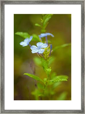 Raindrops On Petals Framed Print