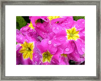 Raindrops On Pink Flowers 2 Framed Print