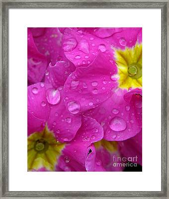 Raindrops On Pink Flowers Framed Print