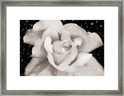 Framed Print featuring the photograph Raindrops On Sepia Rose Flower by Jennie Marie Schell
