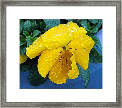 Framed Print featuring the photograph Raindrops On Yellow Pansy by E Faithe Lester