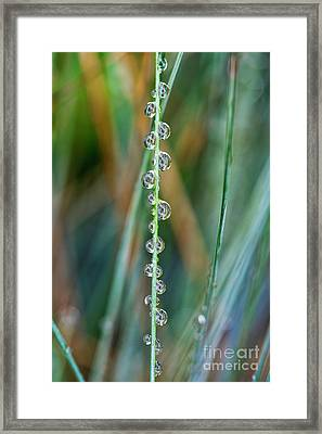Raindrops Framed Print by Tim Gainey