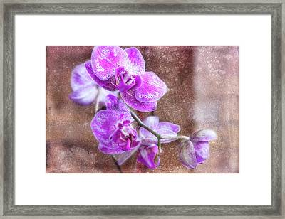 Rained On Framed Print by Joan Bertucci