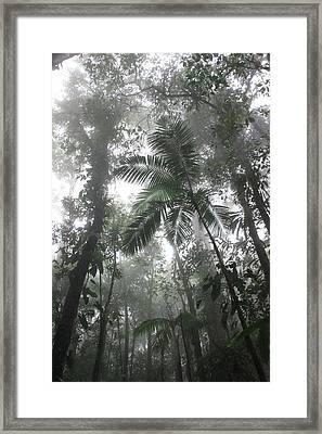 Rainforest Framed Print