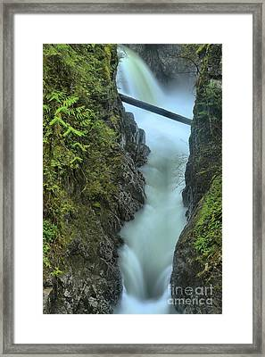 Rainforest Gusher Framed Print by Adam Jewell
