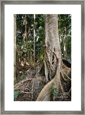 Rainforest Majesty Framed Print