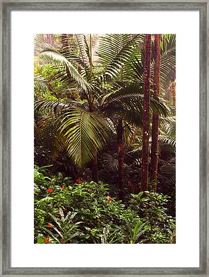Rainforest Palm Trees  Framed Print by Thomas R Fletcher