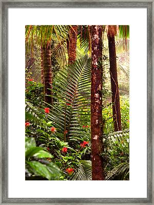 Rainforest Palms And Hibiscus Framed Print by Thomas R Fletcher