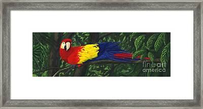 Rainforest Parrot Framed Print