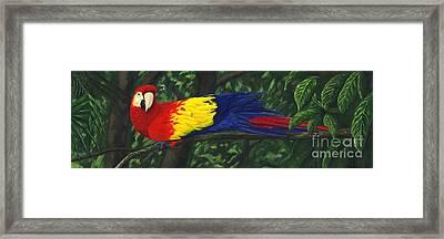 Rainforest Parrot Framed Print by JoAnn Wheeler