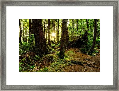 Rainforest Path Framed Print by Chad Dutson