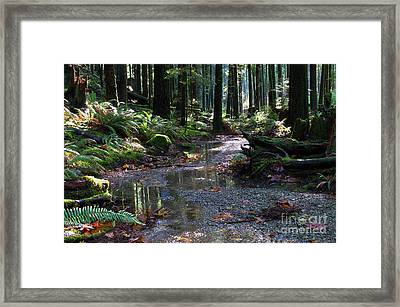 Framed Print featuring the photograph Rainforest Trail 2 by Sharon Talson