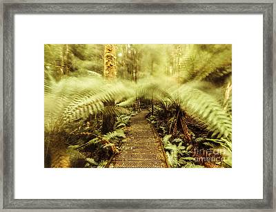 Rainforest Walk Framed Print